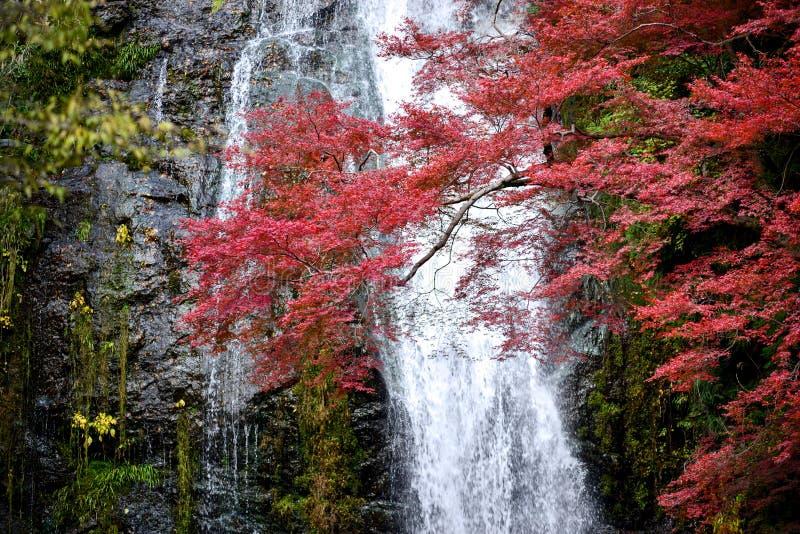 Folhas da cachoeira e do outono de Minoh imagens de stock royalty free