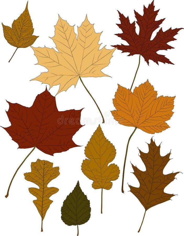 Folhas da cor da queda ilustração royalty free