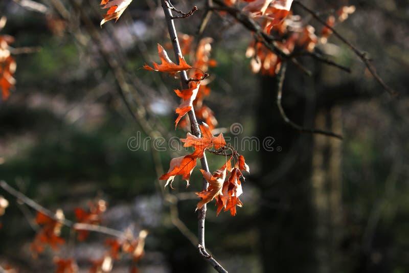Folhas da cor em um fundo do inverno imagens de stock royalty free