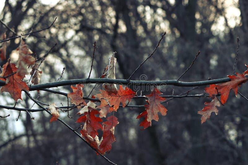 Folhas da cor em um fundo do inverno imagem de stock royalty free