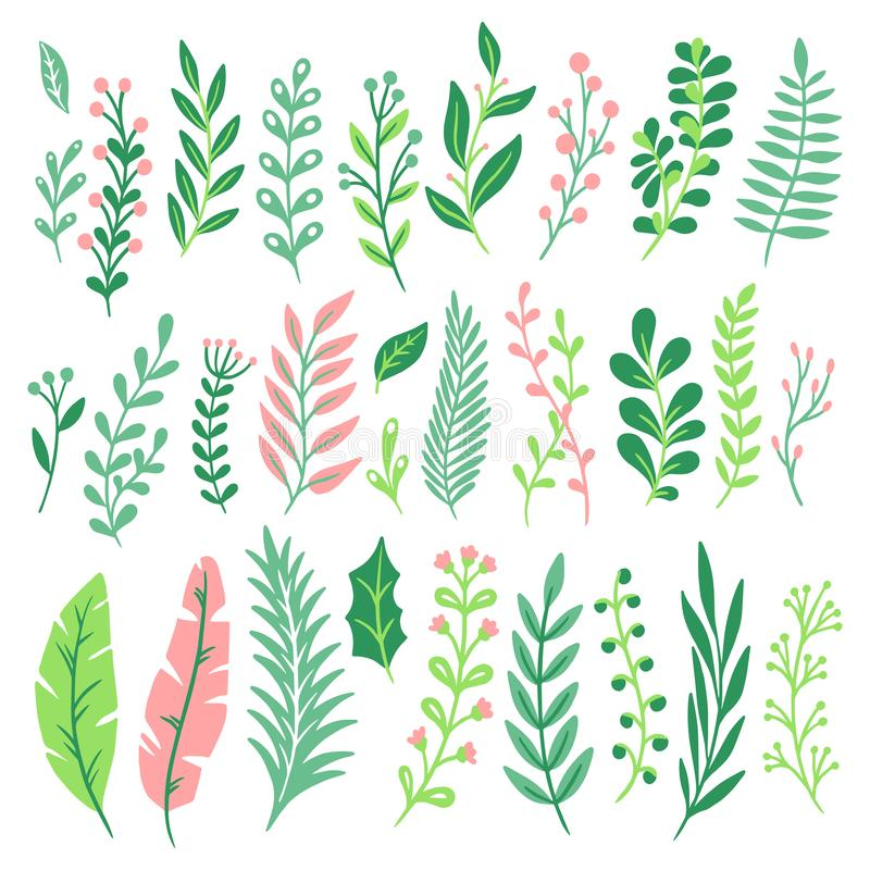 Folhas da decoração A folha da planta verde, as hortaliças das samambaias e a samambaia natural floral saem do vetor isolado ajus ilustração do vetor