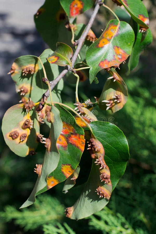 Folhas da doença de planta imagem de stock royalty free