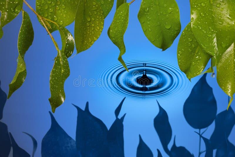 Folhas da gota da água fotos de stock