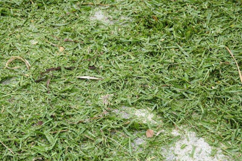Folhas da grama foto de stock royalty free