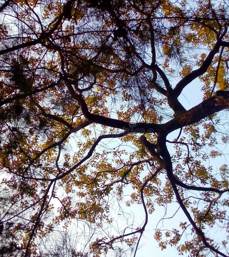 Folhas da laranja do céu azul foto de stock royalty free