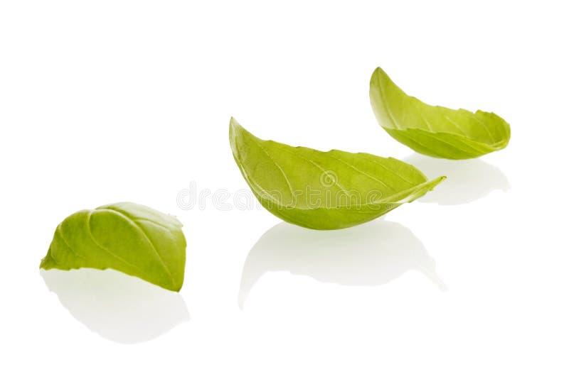 Folhas da manjericão no branco foto de stock royalty free