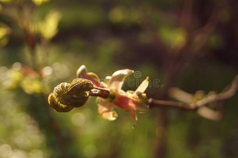 Folhas da mola, manhã ensolarada, morna imagens de stock royalty free