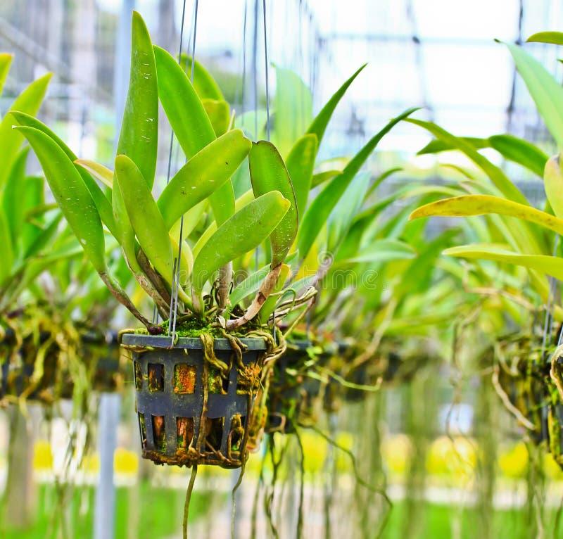 Folhas da orquídea imagem de stock royalty free