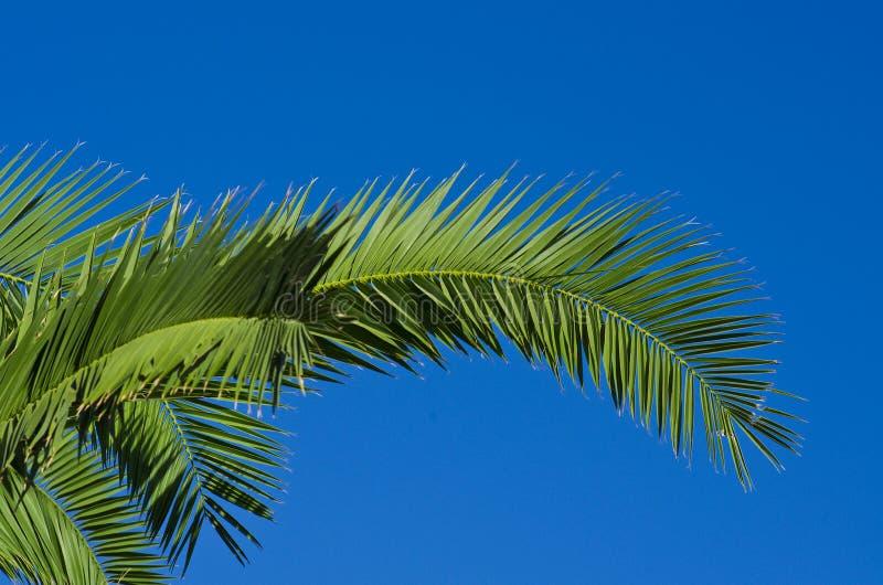 Download Folhas da palma foto de stock. Imagem de fundo, verde - 26520576