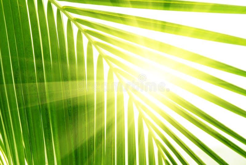 Folhas da palma fotos de stock