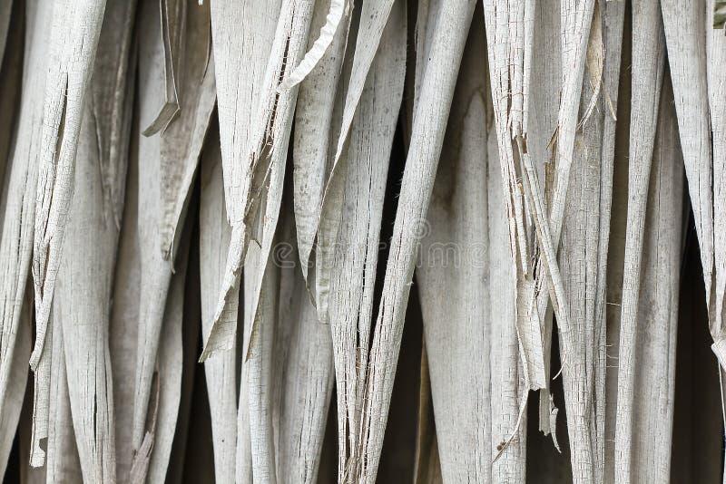 Folhas da palma da palma secas na natureza foto de stock