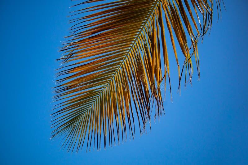Folhas da palmeira fotografia de stock royalty free