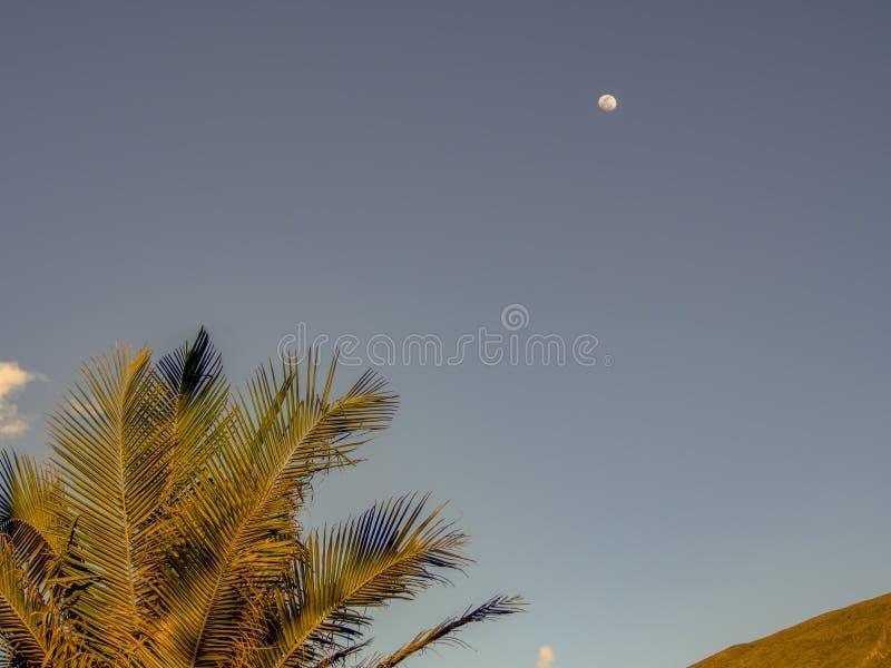 Folhas da palmeira com a lua na distância foto de stock