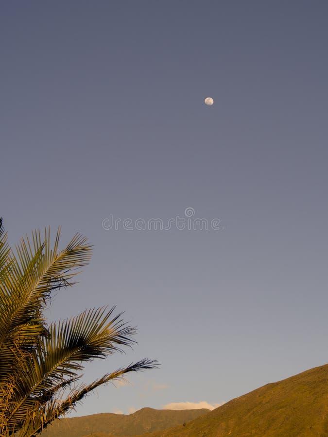 Folhas da palmeira com a lua na distância - vertical imagens de stock