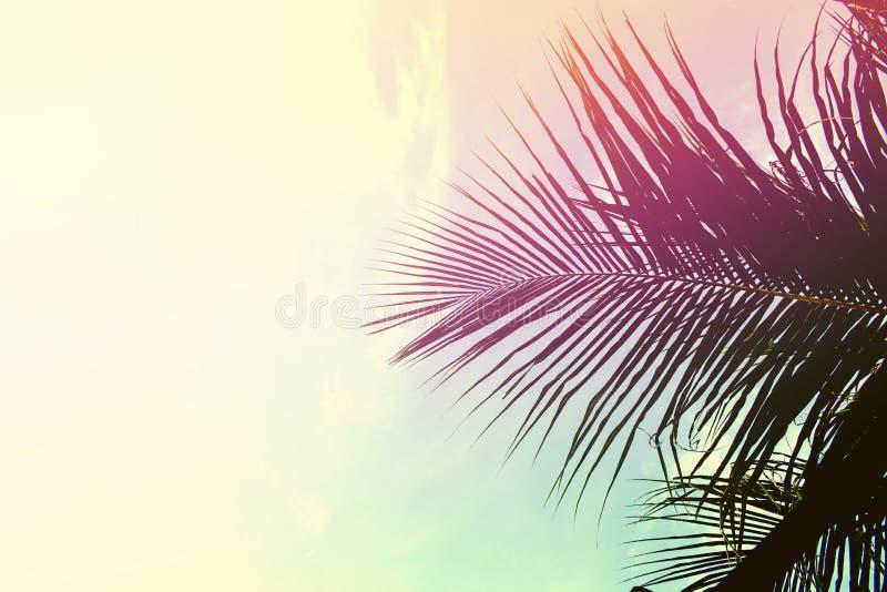 Folhas da palmeira no fundo do céu Folha de palmeira sobre o céu O rosa e o amarelo tonificaram a foto fotografia de stock royalty free