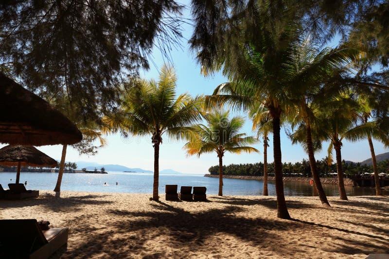 Folhas da palmeira sobre a praia luxuosa Conceito das f?rias de ver?o imagens de stock royalty free