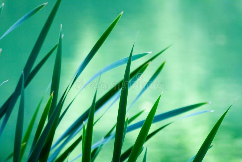 Folhas da planta Spiky imagem de stock royalty free
