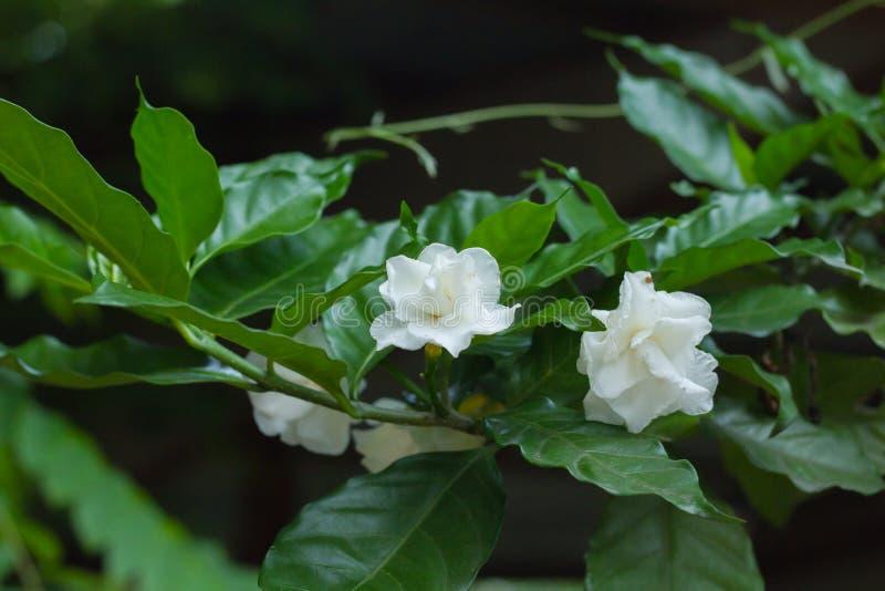 Folhas da poça e do verde fotos de stock royalty free