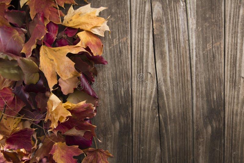Folhas da queda com fundo de madeira foto de stock royalty free