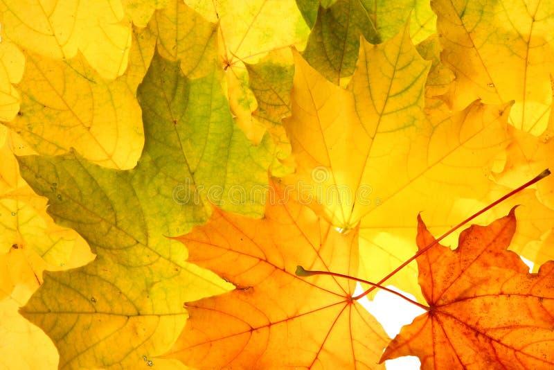 Folhas da queda do outono foto de stock royalty free
