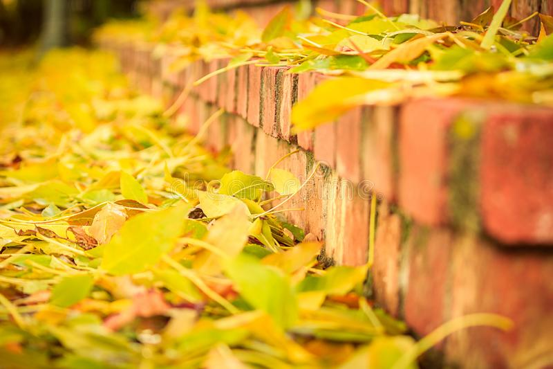 Folhas da queda em etapas do tijolo fotografia de stock royalty free