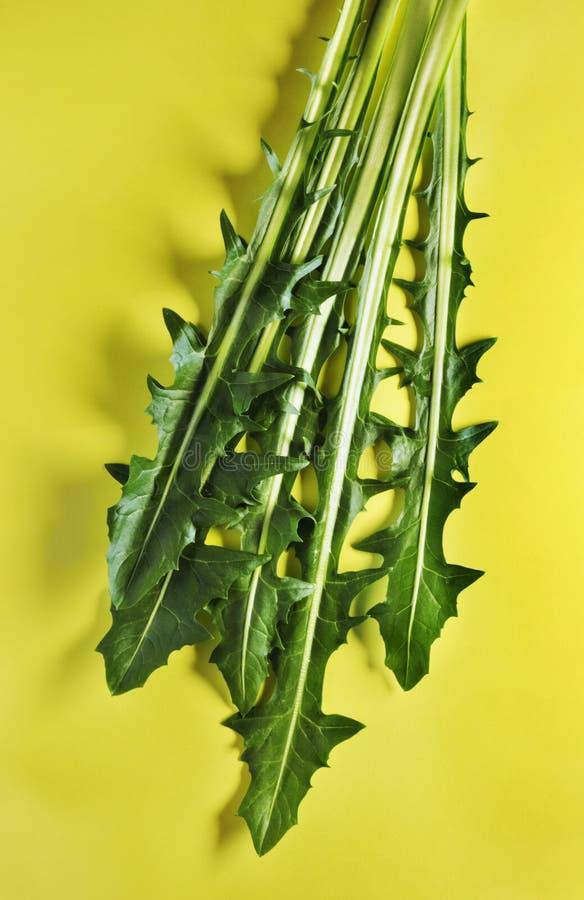 Folhas da salada da chicória fotos de stock royalty free