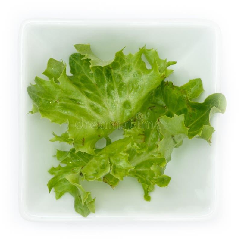 Folhas da salada da endívia de Escariol Eskariol foto de stock