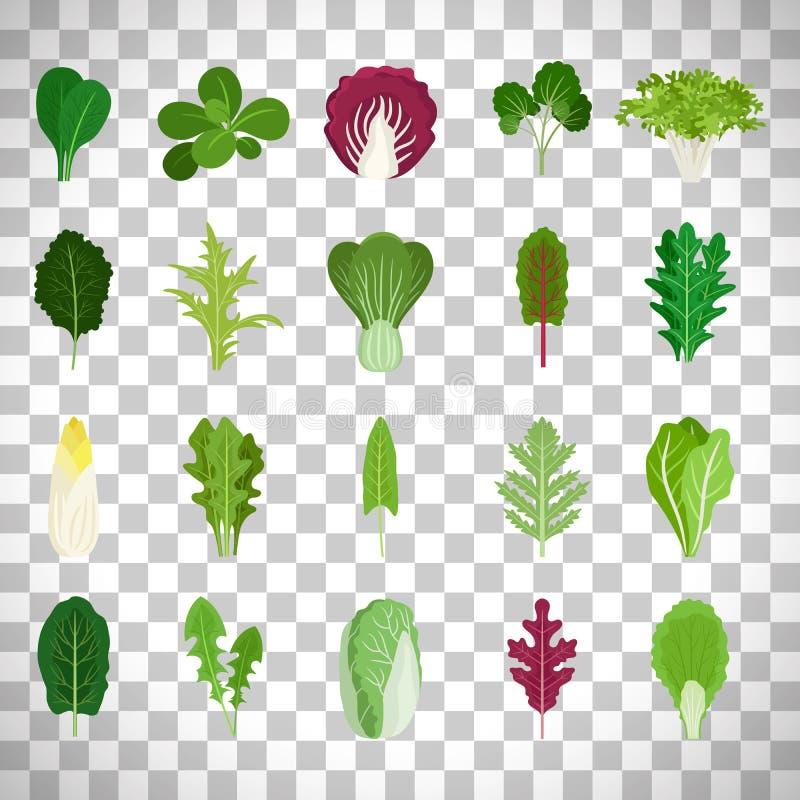 Folhas da salada verde no fundo transparente ilustração do vetor