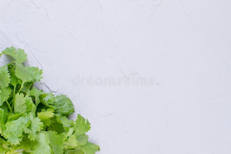 Folhas da salsa e espaço frescos da cópia fotos de stock royalty free