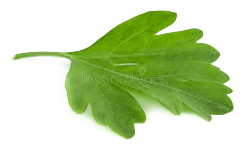 Folhas da salsa fresca isoladas no fundo branco Macro fotos de stock royalty free