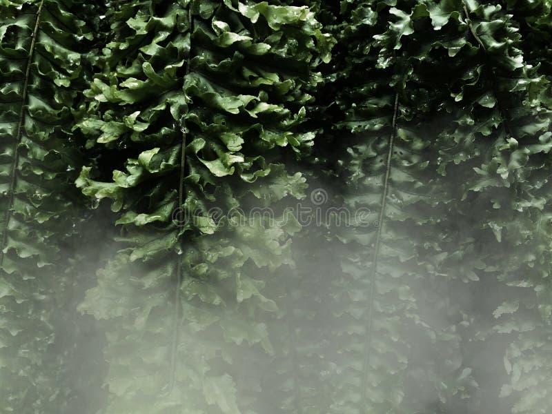 Folhas da samambaia e névoa branca no fundo escuro fotos de stock
