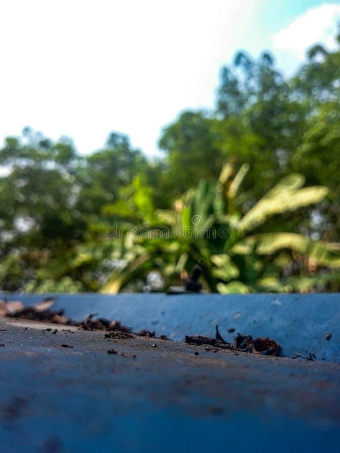 Folhas da sujeira das árvores imagem de stock