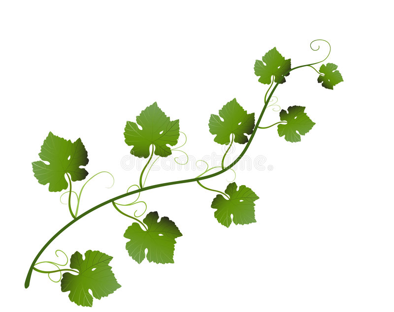Folhas da uva ilustração stock