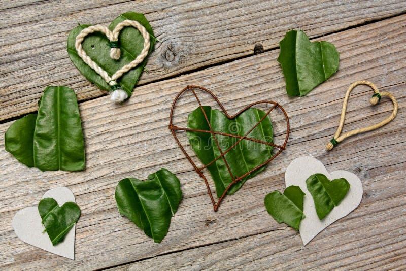 Folhas dadas forma coração imagem de stock