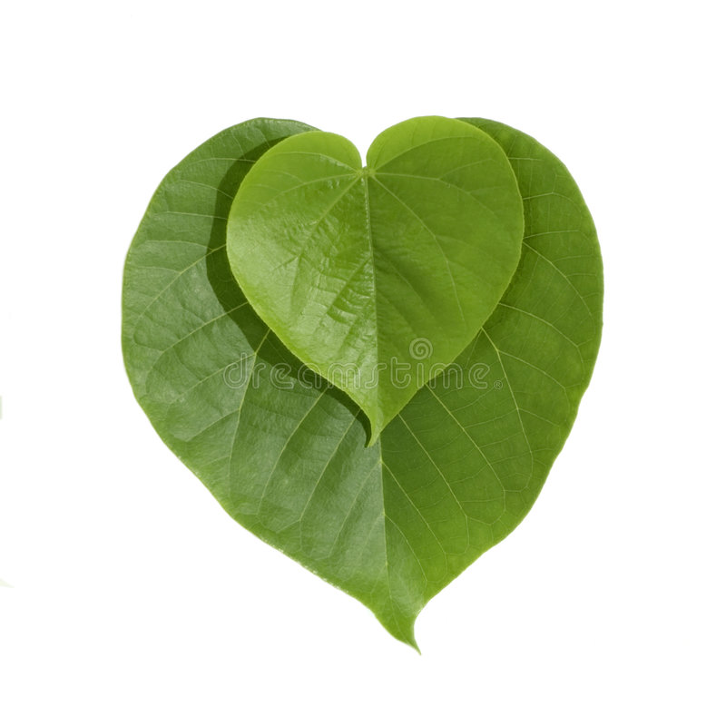 Folhas dadas forma coração do verde fotos de stock