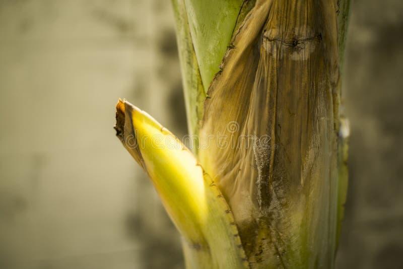Folhas das árvores de banana na selva imagens de stock royalty free