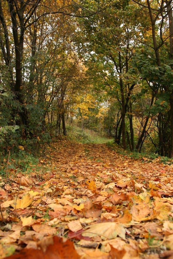 Folhas das árvores na estrada no outono fotos de stock