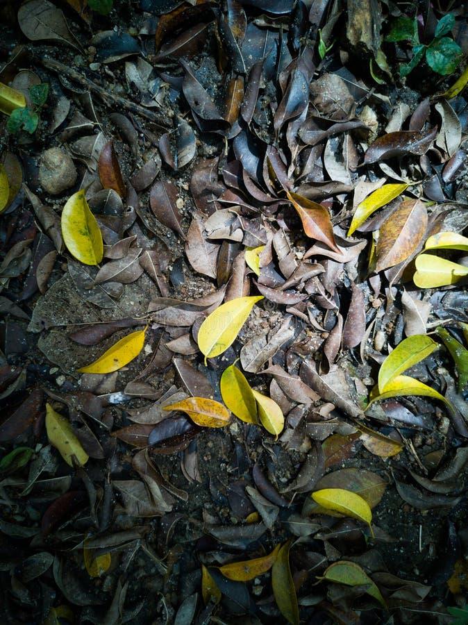 Folhas de Autmn falhadas para baixo com luz solar fotografia de stock royalty free