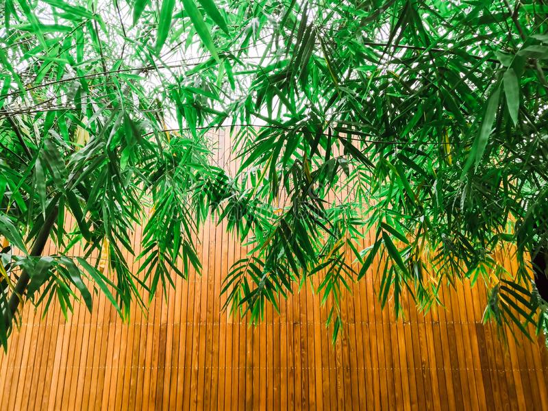 Folhas de bambu verdes e placas de madeira fotografia de stock