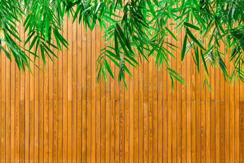 Folhas de bambu verdes e placas de madeira imagens de stock
