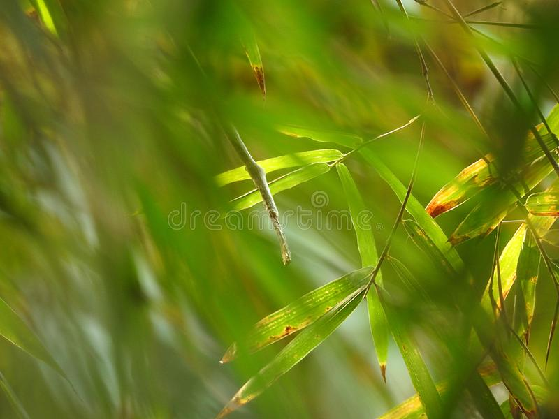 Folhas de bambu verdes no forground e no fundo os mais florest tropicais borrados fotografia de stock royalty free