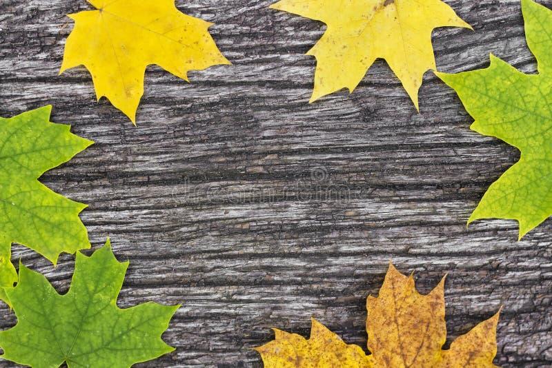 Folhas de bordo caídas na tabela de madeira velha Fundo do outono imagens de stock royalty free