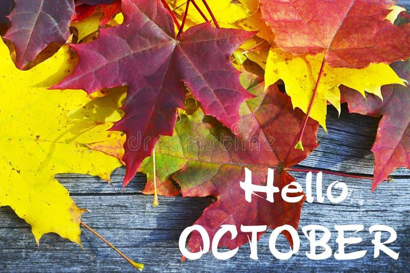 Folhas de bordo coloridas na tabela de madeira velha olá! outubro Conceito do outono Fundo da estação de queda fotografia de stock