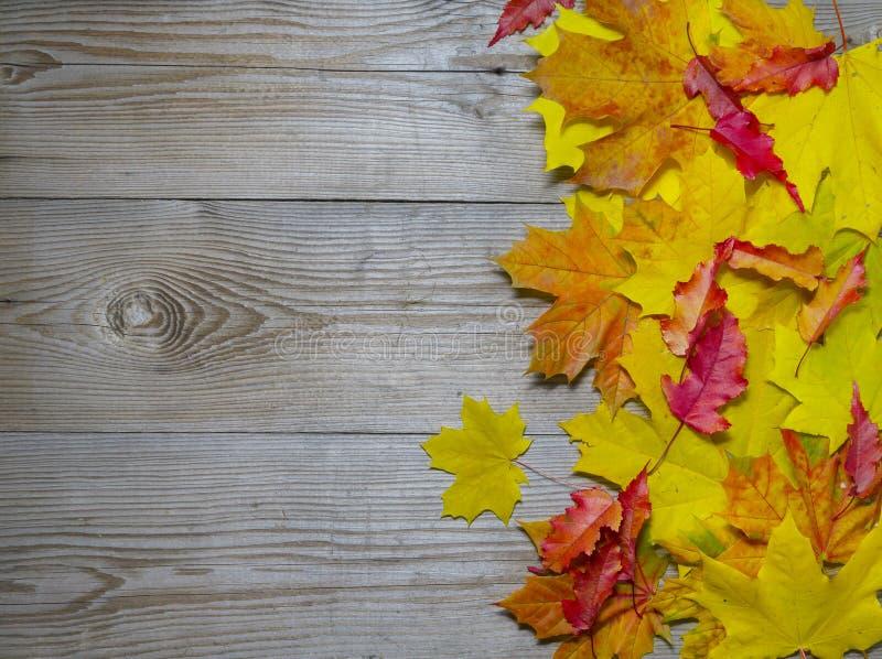 Folhas de bordo outonais no fundo de madeira velho foto de stock