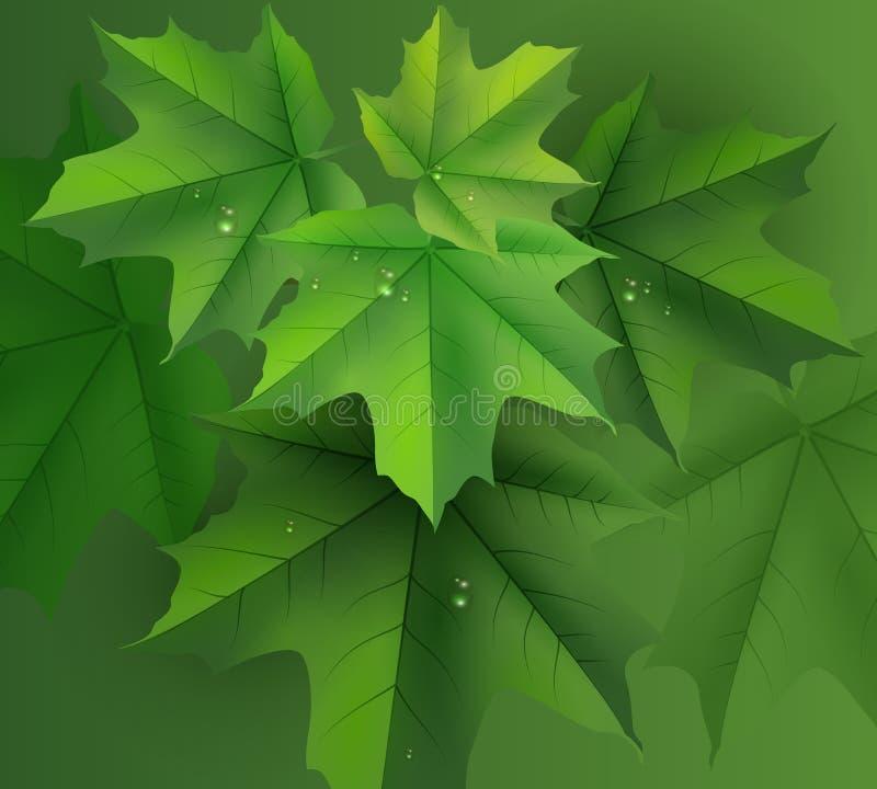 Folhas de bordo verdes fundo e gotas de orvalho ilustração do vetor