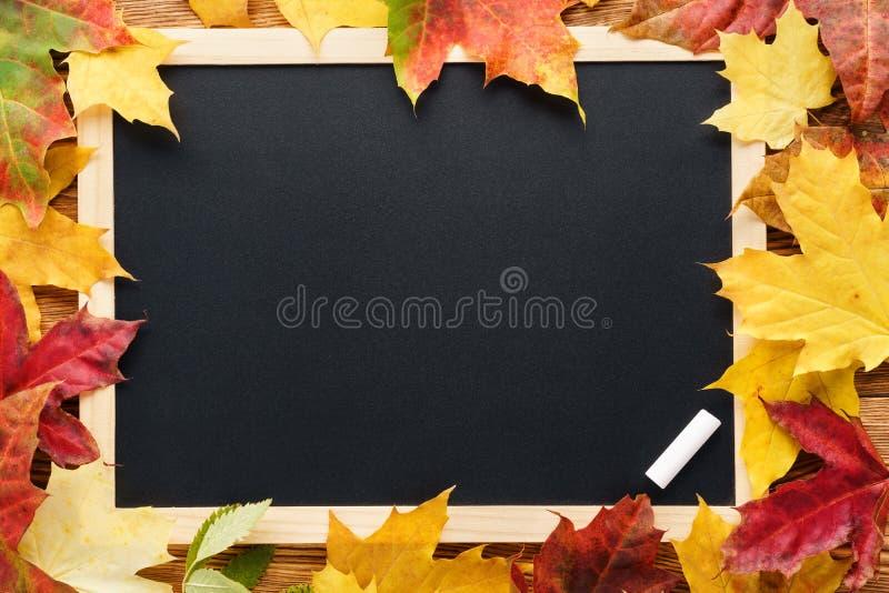 Folhas de bordo vermelhas e amarelas em torno de um quadro-negro De volta ? escola fotos de stock