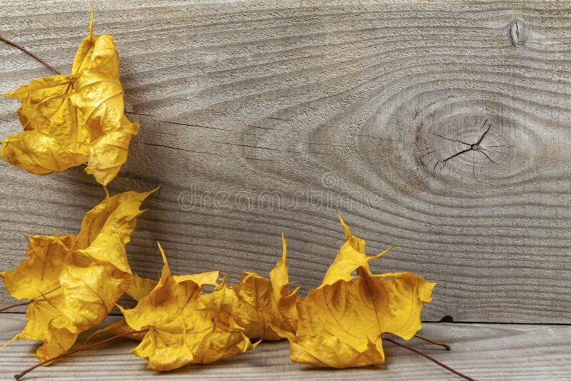 Folhas de carvalho amarelo sobre fundo de madeira fotos de stock royalty free
