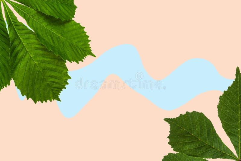 Folhas de castanheiro verde sobre fundo colorido imagens de stock royalty free