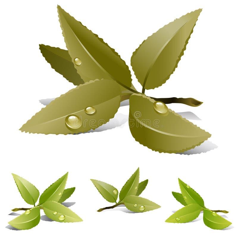 Folhas de chá ilustração stock