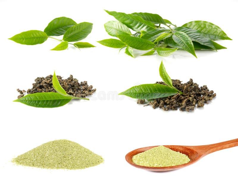 Folhas de chá, chá seco, série da foto do pó do chá no fundo branco foto de stock royalty free